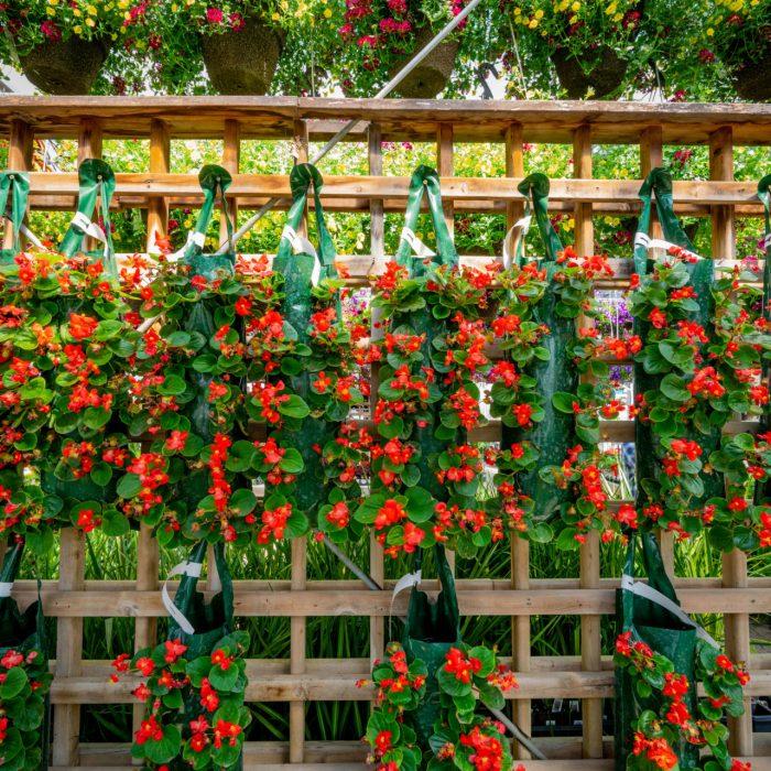 Flowers (120 of 291)