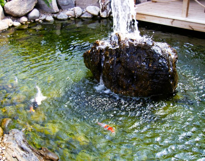 Water Features & Inclusions